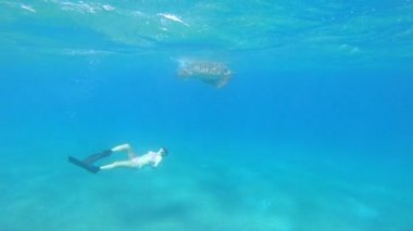 Girl Freediving Admiring Giant Sea Turtle Red Sea Egypt  Marsa Alam
