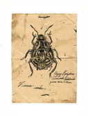 insect,retro post card