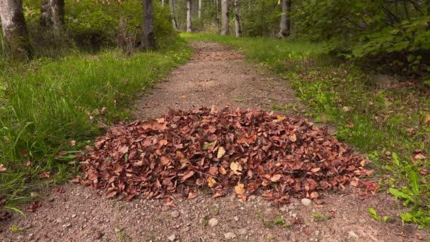 Fogli di autunno che cade sul mucchio di foglie