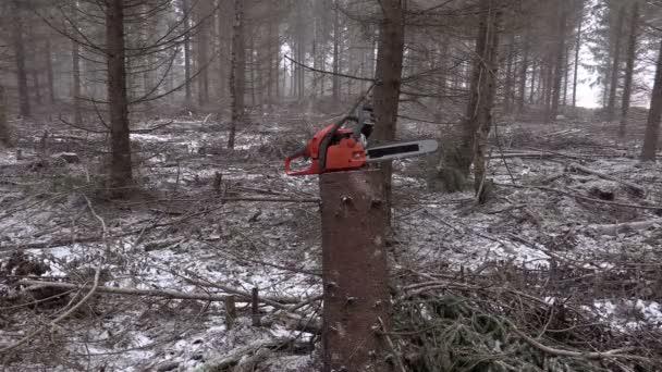 Motorsäge im Winter am Baumstumpf im Wald