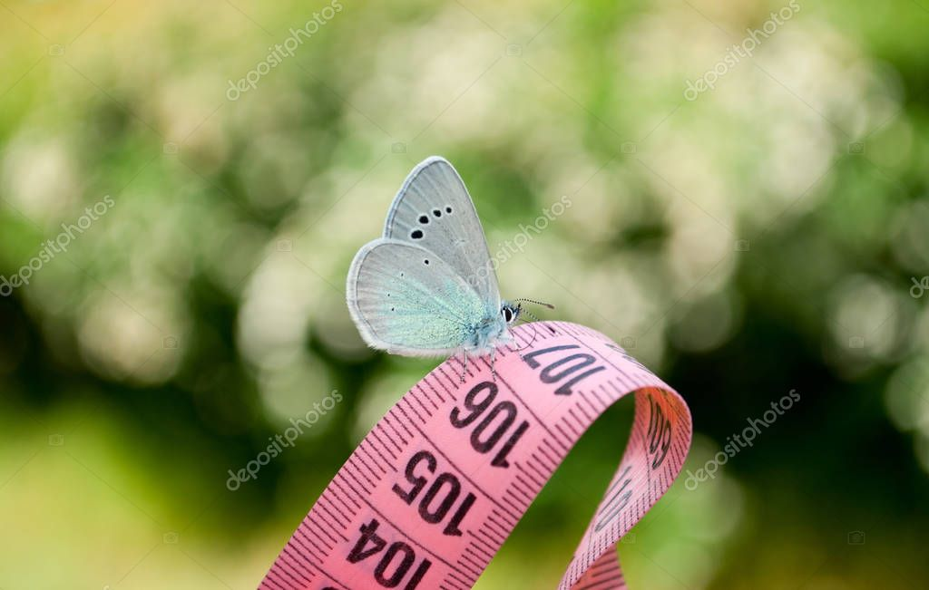 on a measuring tape of pink color there is a blue white butterfly, a close view, on a blurry background, a dream of ease to flounder to lose weight diet, side view, green grass, white bush, white flowers, measuring tape of pink color, figures