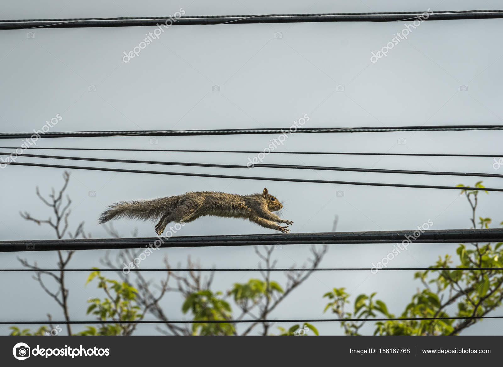 Squirrel On Telephone Wire - DATA WIRING •