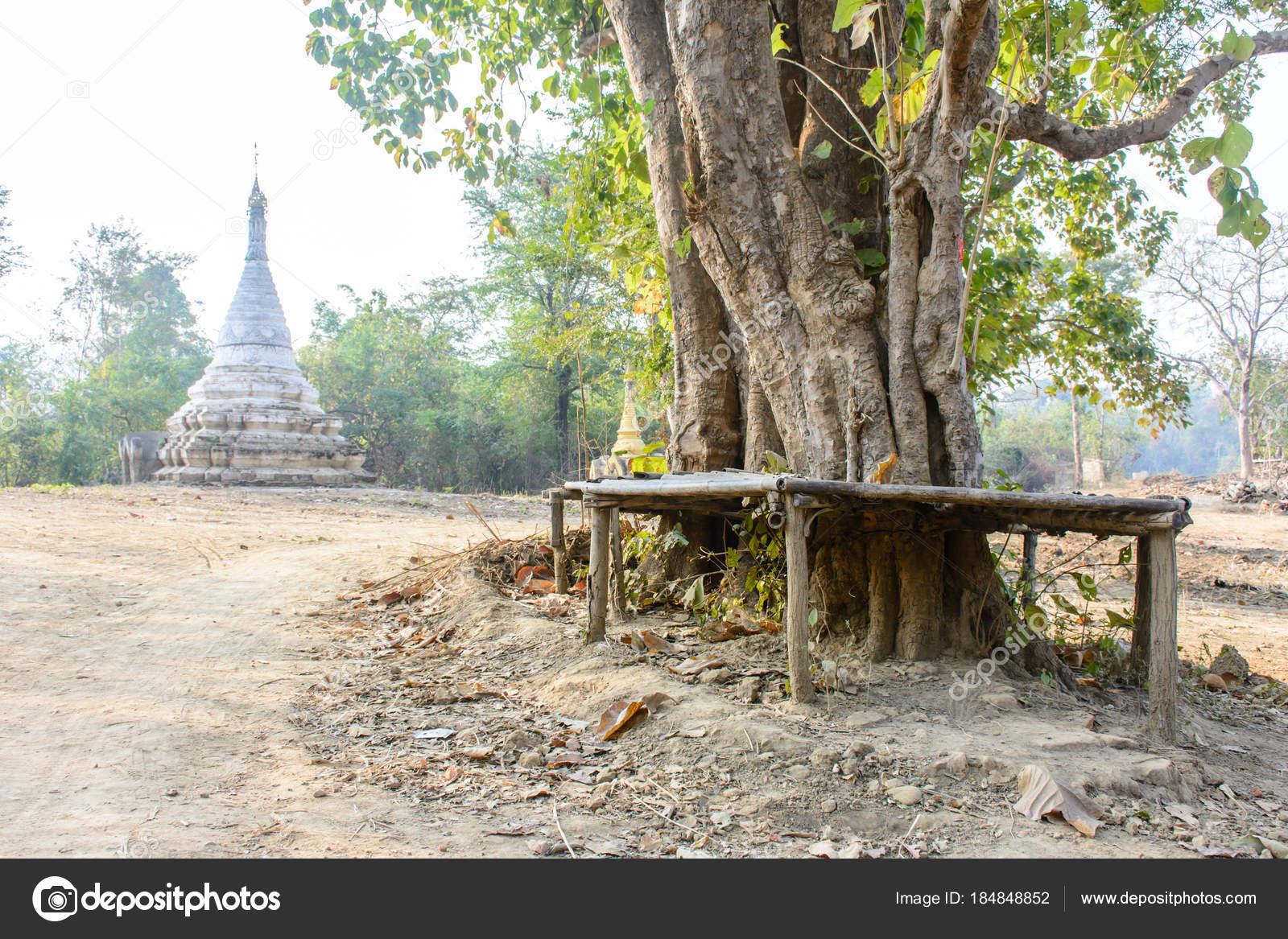 Rural Voir De La Pagode Arbre Et Banc Photographie Aungmyintmyat