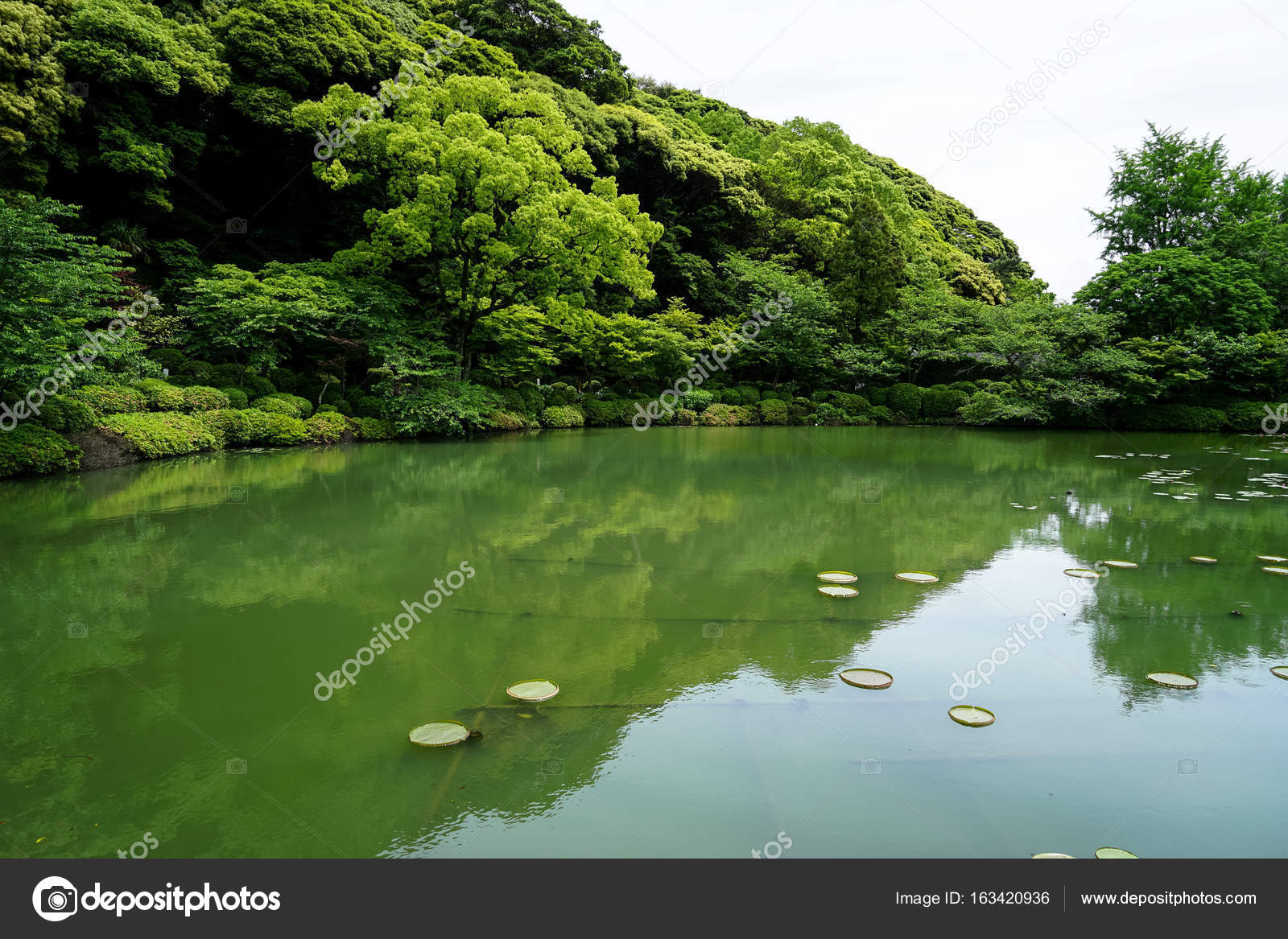 Beautiful Scene Of Lush Green Japanese Garden Landscape With