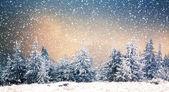 Zimní wonderland - Vánoční pozadí zasněžené jedle v