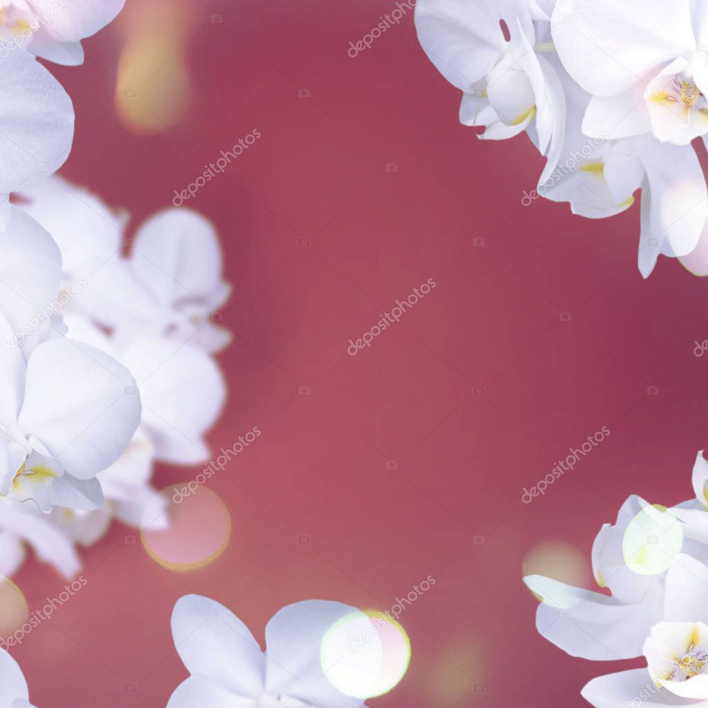 White Orchid on red background.