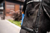 Photo purebred horse with bridle