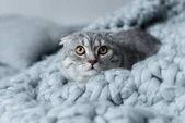 kočka na vlněné deky