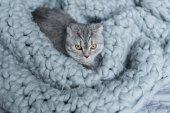 Fényképek macska a gyapjú takaró