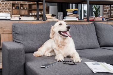 Golden retriever dog relaxing on sofa with tv remote control, newspaper and eyeglasses stock vector