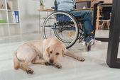 Fotografie Hund in der Nähe von Mann im Rollstuhl