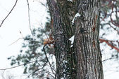 Fotografie selective focus of cute squirrel sitting on tree in winter forest
