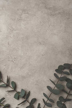 top view of green eucalyptus leaves on concrete surface with copy space