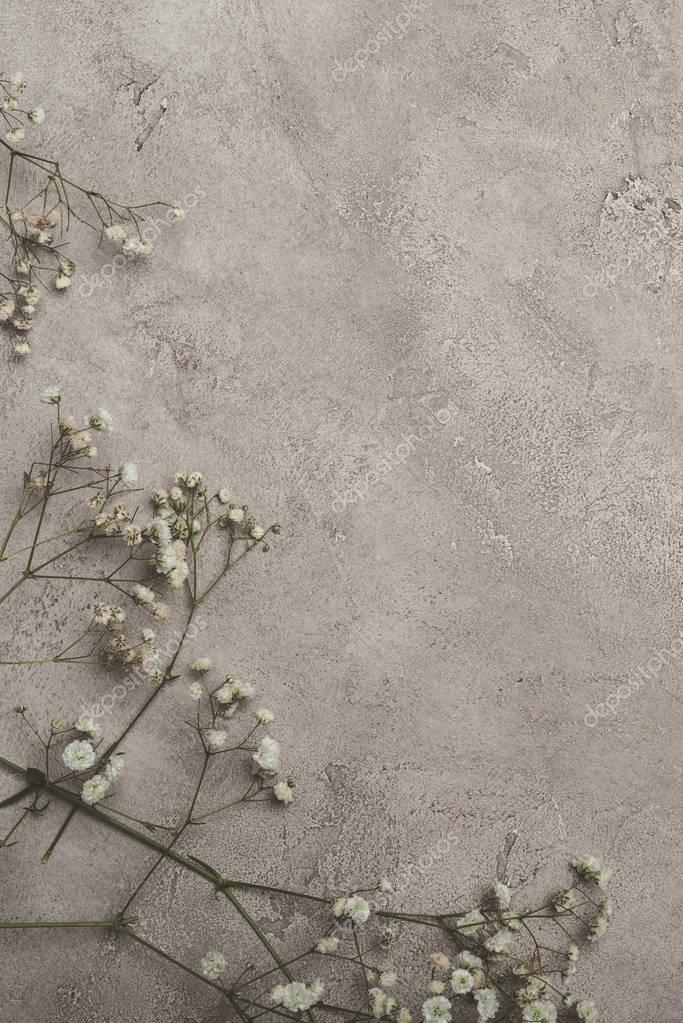top view of white flowers on concrete surface with copy space