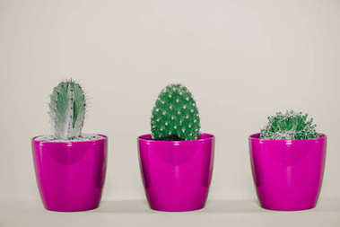 close-up view of beautiful green cactuses in purple pots on grey