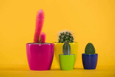 beautiful green and pink cactuses in colorful pots on yellow