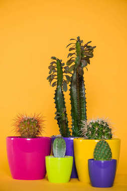 beautiful various green succulents in colorful pots isolated on yellow