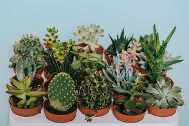 close-up view of beautiful various green succulents in pots isolated on grey