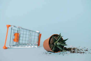 close-up view of aloe in pot with soil and empty shopping trolley on grey