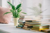 potted plant with green leaves and books on windowsill