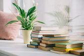Fotografie Hrnková rostlina se zelenými listy a knihy na parapetu
