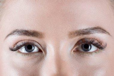 Close-up view of grey female eyes with long eyelashes