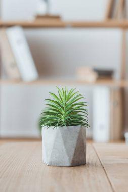 close up of decorative succulent plant in concrete pot