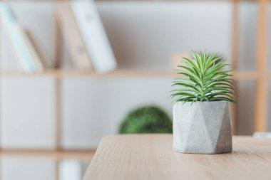 close up of succulent plant in concrete pot