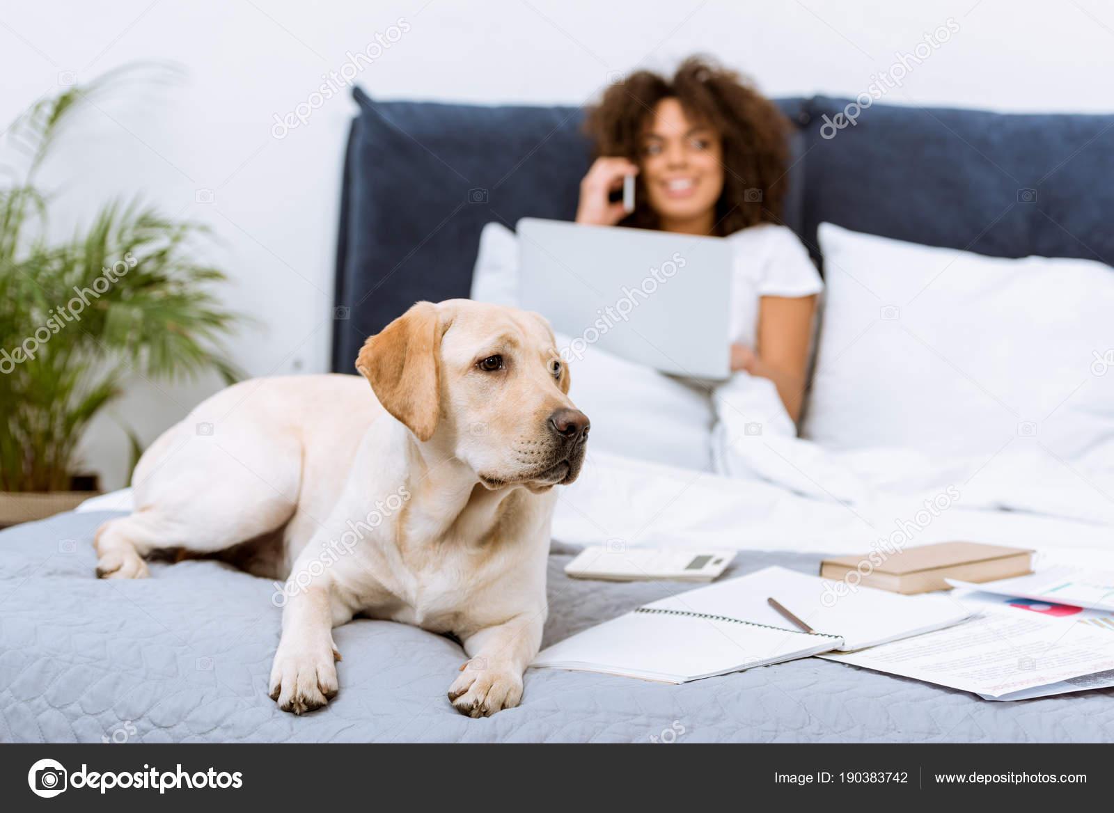 Hermoso Perro Labrador Acostado