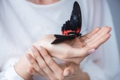 cropped view of girl with beautiful alive butterfly in hands, isolated on grey
