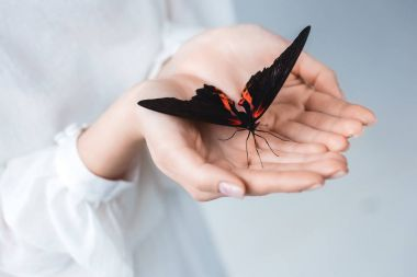 Cropped view of woman with beautiful alive butterfly in hands, isolated on grey stock vector