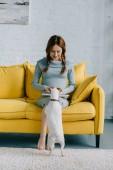 Fotografie těhotná žena atraktivní čtení knihy a palming jack russell teriér v obývacím pokoji