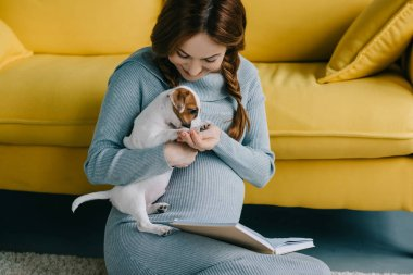 attractive pregnant woman palming jack russell terrier in living room