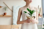 Fényképek vágott lövés pályázat fiatal nő gazdaság zöld cserepes növény, művészeti stúdió