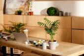 interiér Studio umělce malířské potřeby, laptop a květináči na dřevěný stůl