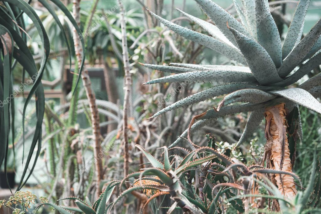 succulents and aloe plants in tropical garden
