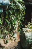 Fotografie malebné shot z cesty do jeskyně v džungli pokryté zelenými listy