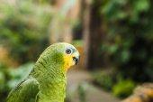 Fotografie Detailní záběr krásné zelené afrotropical papouška