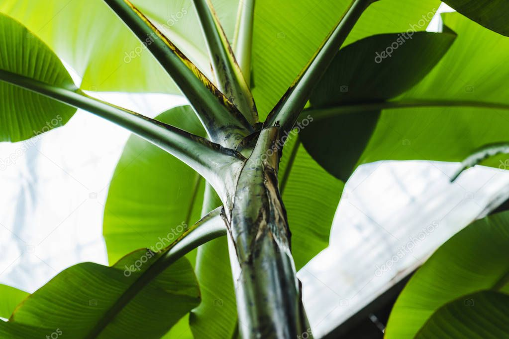 bottom view of beautiful green tropical plant