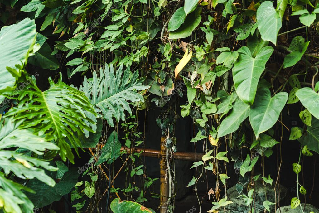 bamboo fence covered with vines and tropical leaves