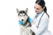 usmívající se žena veterinární lékař husky izolované na bílém pozadí