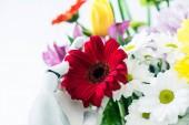 Fotografie Detailní pohled robota drží květ krásné červené gerbery izolované na bílém