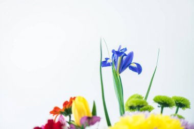 close-up view of beautiful blooming flowers isolated on grey