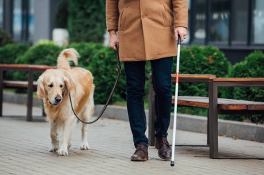 Cropped view of blind man with walking stick and guide dog walking on urban street