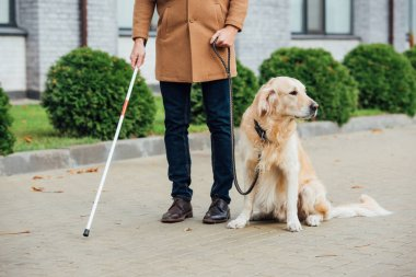 Cropped view of blind man with guide dog and walking stick on urban street