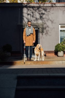 Blind man with guide dog and walking stick crossing road at street
