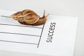 Photo slimy brown snail on white paper with success lettering isolated on white