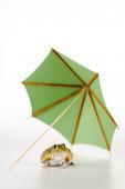 carino rana verde sotto piccolo ombrello di carta su sfondo bianco