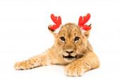 roztomilé lví mládě v červené jelení rohy čelenka izolované na bílém