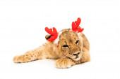 aranyos oroszlán kölyök piros szarvas szarvas szarv fejpánt elszigetelt fehér